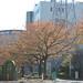 町田樹 画像86