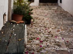 el banco donde se sientan las flores... (la3endiscordia.) Tags: flores 50mm explore la3endiscordia cdgexplorer siempreescdiz