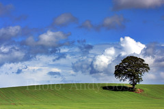 Solar Tree, Ireland. (Andy_Goss) Tags: trees ireland irish scenic carlow irishlandscapes vanagram updatecollection gettyimagesirelandq1