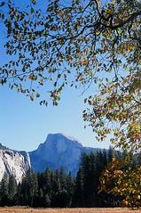 Half Dome and Black Oaks (Serendipitous Light) Tags: autumn release cable yosemite gitzo nikonfe2 velvia50 ar3