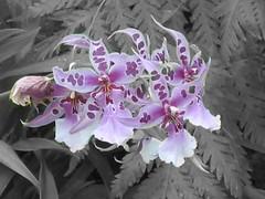 Orchids, Kew Gardens