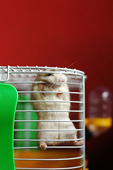 MUNCH MUNCH! (Hamster Lover 14) Tags: funny hamsters