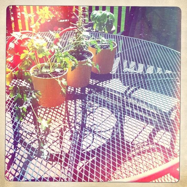 the wittle herb garden