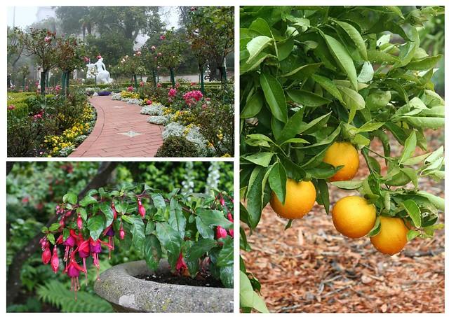 hearst garden