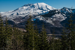 Spring is in the air (Culinary Fool) Tags: usa crater washington giffordpinchotnationalforest february volcano snow 2017 tree forest brendapederson mtsthelensnationalmonument spiritlakehwy wa cascademountains mtsthelens culinaryfool mountain