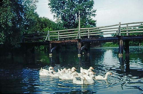 Bridge over pond at Emmanuel International Headquarters in Stouffville