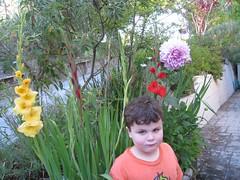 Gladiolus & Dahlia Boy