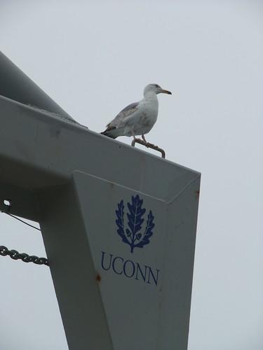 gull on A-frame