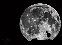 Over the Moon (* mateja *) Tags: bw mountains photomanipulation photoshop fullmoon slovenia slovenija steinbock mateja julianalps capraibex kozorog anawesomeshot julijskealpe 100commentgroup