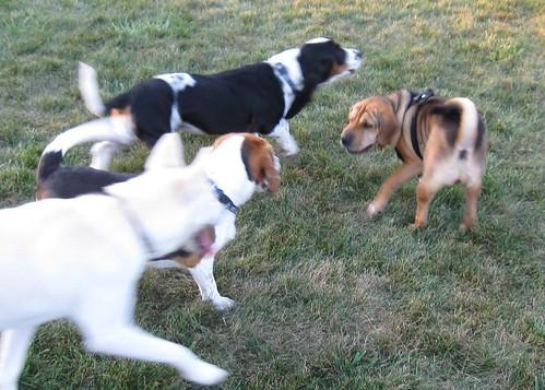 The Bark Park Crew
