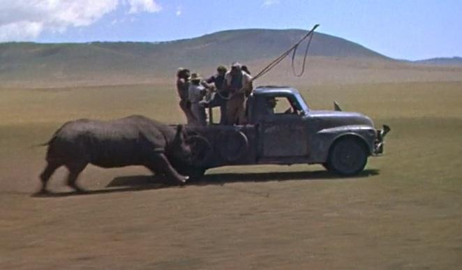 rhino-hatari