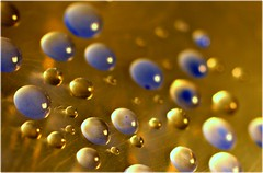 Field of droplets (genevieve_beecham) Tags: abstract macro water droplets random waterdroplets bluedroplets