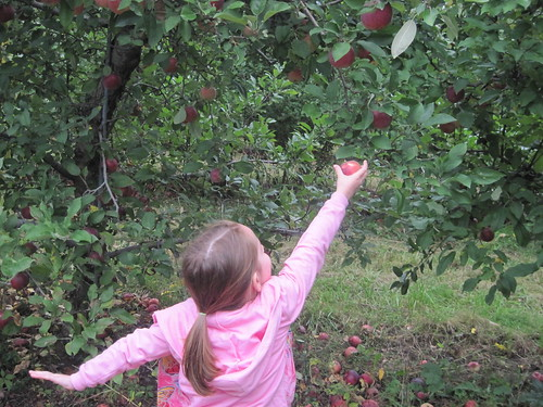 Bella Apple Picking