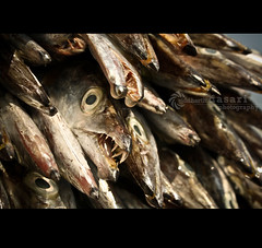 Fish again!! (SiddharthDasari) Tags: india fish canon harbor dangerous fishing eyes focus dof auction teeth stock dry hobby sharp pile bite selling deadly vizag andhrapradesh visakhapatnam canonrebelxs canoneos1000d