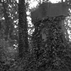 Jewish Cemetery, Pabianice (bolas) Tags: 6x6 cemetery mediumformat poland jewish rolleicord fomapan triotar