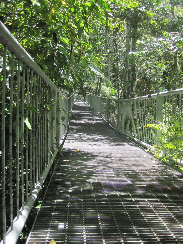 Heading into the rainforest....