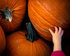 reaching for Halloween... (Will Montague) Tags: autumn orange black fall halloween pumpkin cool nikon child hand reaching kentucky touch reach montague allhallowseve 50mmprime d80 willmontague