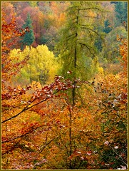 Autumn Forest (schulz.steffen) Tags: autumn forest catchycolors germany hessen herbst wald indiansummer odenwald thecolors rodensteiner