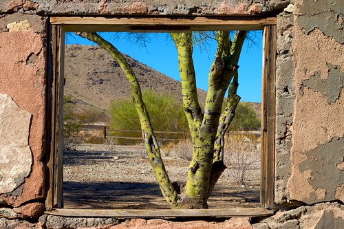 2009/365/304 Pale Verde Through The Window