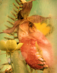 Preserved Lady's Slipper (dsbrennan) Tags: pink flowers wild stilllife orange plants brown orchid flower fern green nature yellow closeup museum gold beige buttercup cream magenta salmon naturalhistory collection educational organic preserved specimen polyurethane ladysslipper ecru