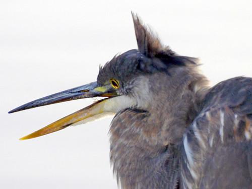 charles heron up close