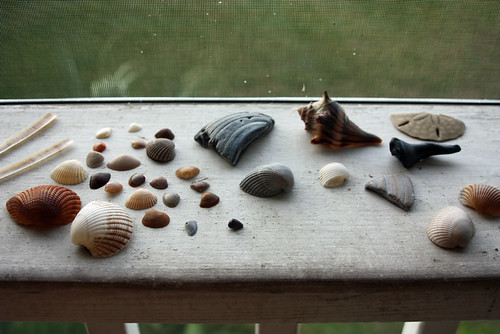 Beach finds.