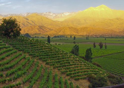 Wine Garden - Chile