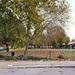 Hartington Park - Autumn leaves