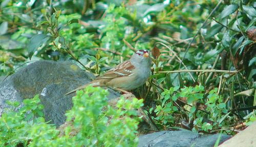 bird2 campolo