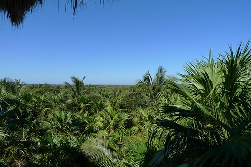 Tulum: Nueva Vida
