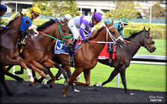 2017 El Camino Real Derby @ Golden Gate Fields (billypoonphotos) Tags: zakaroff california el camino real derby 2017 golden gate fields mario gutierrez jockey kyle frey ann arbor eddie bay area synthetic track tapeta photo picture photographer photography horse racing billypoon billypoonphotos nikon d5500 55200mm 55200 mm lens nikkor thoroughbred news horses riding albany race san francisco stretch kentucky