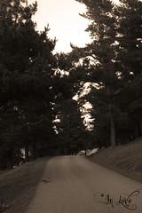 The Road (DaVe In LoVe) Tags: road car camino coche campo inlove laarboleda cutsodier