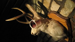 PDT Rabbit 2, NYC (ChrisGoldNY) Tags: city nyc newyorkcity urban usa newyork sunglasses america bars forsale humor taxidermy albumcover gothamist bookcover rabbits pdt pleasedonttell chrisgoldny chrisgoldberg chrisgold chrisgoldphoto chrisgoldphotos