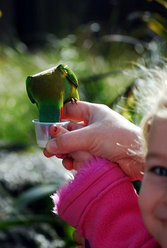 Bird Encounter ~ Sienna