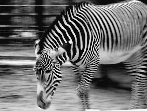 Zoo_Frankfurt_2009_03_568 Kopie