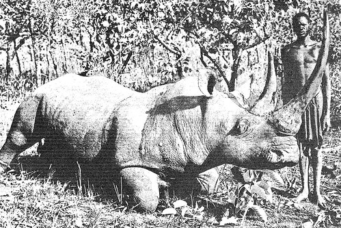 Big-horned rhino killed in Uele