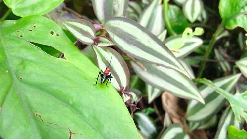 你拍攝的 毅英1:黑背細蟴若蟲的沙龍照。