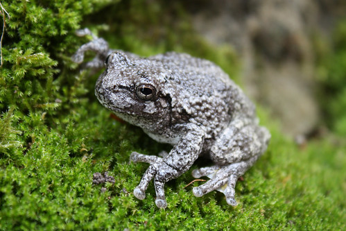 Frog on the moss