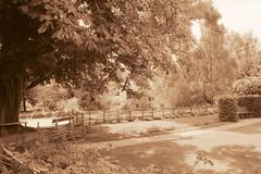 Village garden (Necator) Tags: film denmark dk rodinal negativescan rodinal150 ilfordfp4 canoneos600 canoscan8800f pederstrup grantoftegaard
