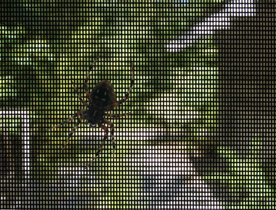 Spider on screen