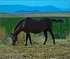 yegua pastando (ftjabugo1) Tags: caballos campo animales galope abigfave platinumheartaward ftjabugo