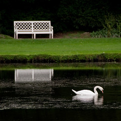 Quiet Reflection (beechlights) Tags: reflection water reflections river bench square swan seat yorkshire squareformat waterfeature fountainsabbey northyorkshire 1x1 ripon studleyroyal