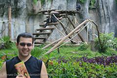IMG_7969 (dantasdesign) Tags: brazil brasil sãopaulo zoológico paulo são cidades sopaulo zoolgico