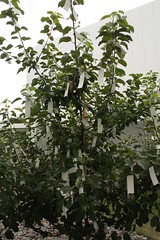 "Yoko Ono's ""Wish Tree for Towada "" at  Towada Art Center, Aomori, Japan - 14 (mickeyono2005) Tags: japan entrance aomori  yokoono   towada  towadaartcenter   19962008 wishtreefortowada19962008"