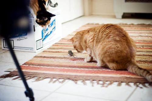 Nari caught a mouse