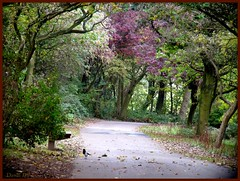 Autumn walk through the park. (Church Mouse 07) Tags: uk trees nature lumix october path autumnleaves panasonic british magpie walkinthepark dmcfz28 churchmouse07
