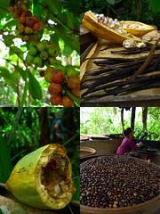 Coffee Farm (J2Kfm) Tags: bali ubud lakebatur kintamani batubulan tampaksiring tegallalang puratirtaempul