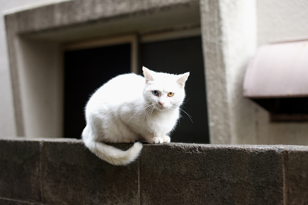Odd eye Cat 2