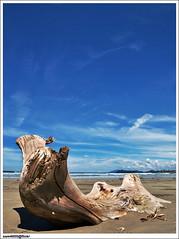 Fallen tree... (sam4605) Tags: travel beach landscape scenery paradise olympus tourist resort malaysia borneo kotakinabalu e3 spa sabah kota nexus kinabalu pantai pemandangan karambunai lanskap sabahborneo 1442mm sam4605 nexusresortspakarambunai