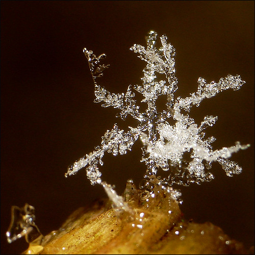 ~ First Seasonal Snow Flake  ~